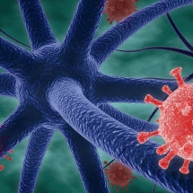 Virus and nerve cells