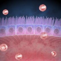 Epidermis cell